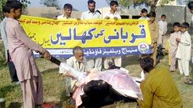 منہاج القرآن تحصیل شکرگڑھ کے زیراہتمام اجتماعی قربانی