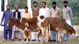 تحریک منہاج القرآن عباس پور آزاد کشمیر کے زیراہتمام اجتماعی قربانی 2011ء