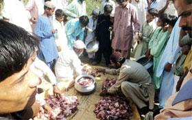 ڈہرکی (سندھ) : اجتماعی قربانی 2012ء
