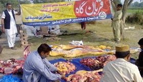 لیہ : منہاج ویلفیئر فاؤنڈیشن کے زیراہتمام اجتماعی قربانی 2012