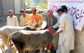 مظفرآباد : اجتماعی قربانی 2012ء