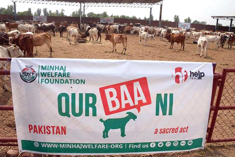 Collective Qurbani 2017 - Minhaj Welfare Foundation