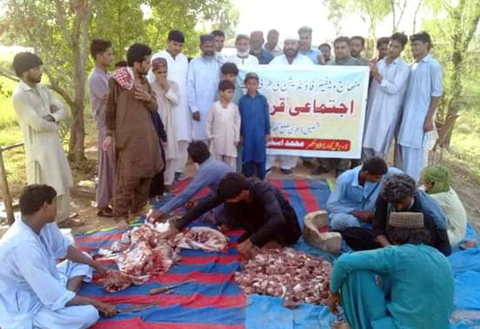 اپر سندھ: منہاج ویلفیئر فاؤنڈیشن کے زیراہتمام اجتماعی قربانی، مستحقین میں گوشت کی تقسیم